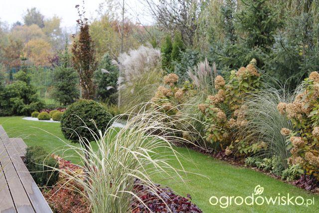 Ogród z lustrem - strona 251 - Forum ogrodnicze - Ogrodowisko