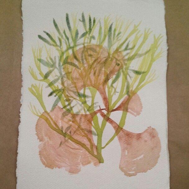 Layered seaweeds
