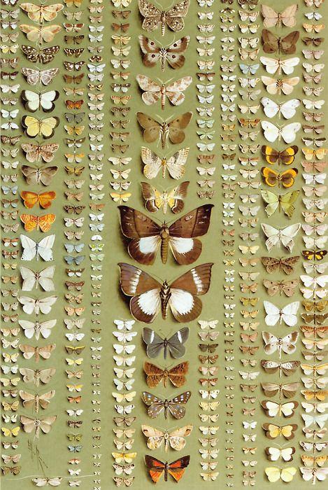 Butterfly wings (via matchbook mag)Inspiration, Butterflies Wings, Butterflies Collection, Painting Flower, Matchbook Mag, Butterfliesgraph Design, Moth, Animal, Butterflies Beautiful