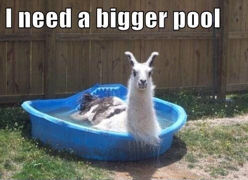 I Need A Pool 116 Best Pool Humor Images On Pinterest  Swimming Pools Animals .