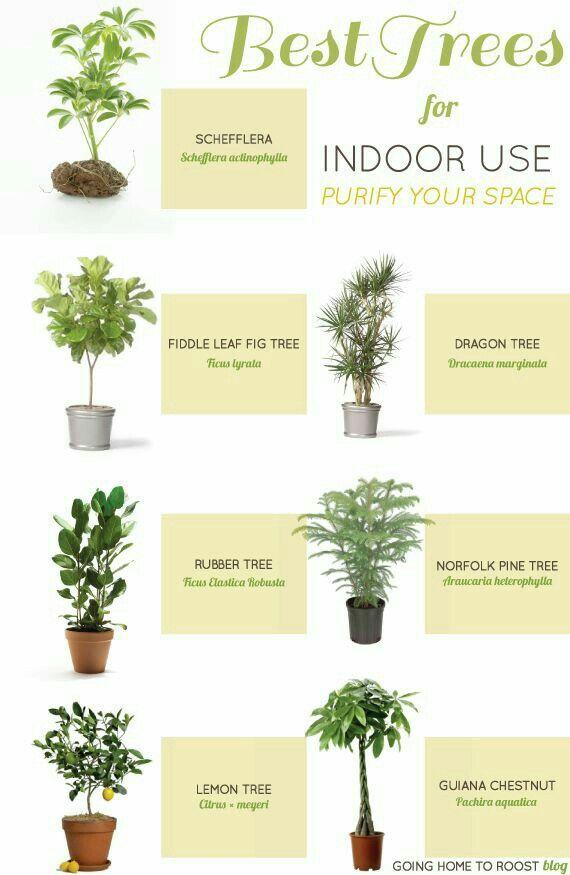 39 mejores im genes sobre plantas en pinterest plantas - Como cuidar una planta de aloe vera en casa ...