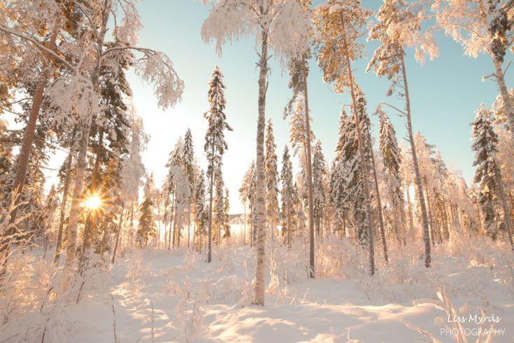 #vinter #landskap #forest #winter #landscape #skiing #scandinavia #nordic #nature #outdoors #snow #frost #crosscountry #skitur #vintervy #liss #friluftsliv #turjenter #vinterlandskap