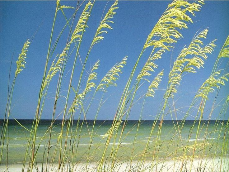 Captiva Island, FL: Islands Sound, Captiva Islands, Islands Captiva, Pine Islands, Sanibel Islands, Islands Crui