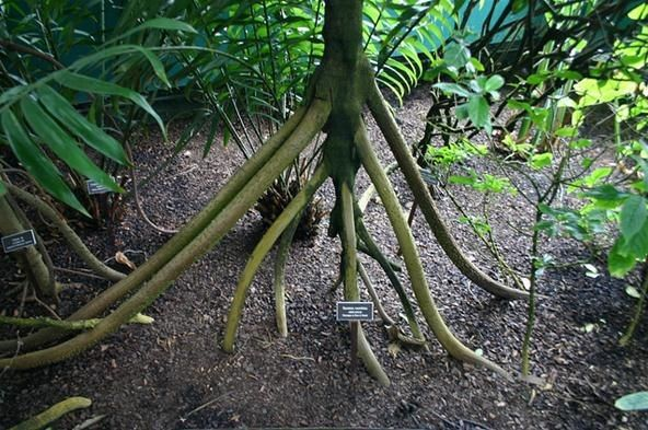 78 best images about unusual tree trunks on pinterest for Unusual small trees