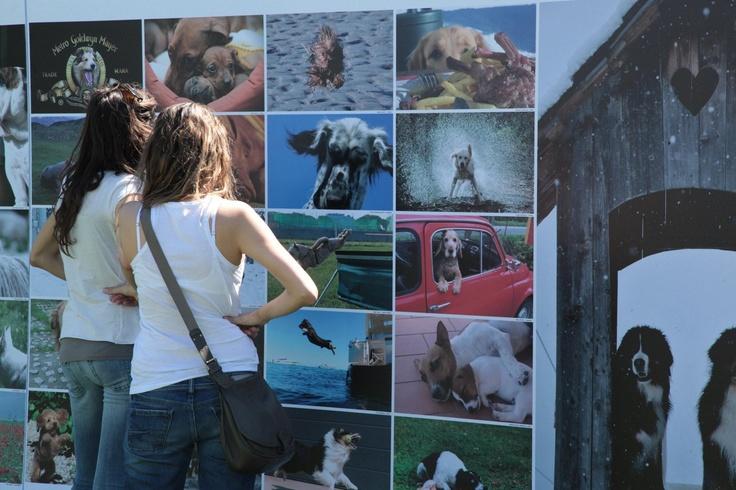 cancorso 2011, cane, cani, concorso, concorsi, ilmessaggero, quotidiano, animali, contest, evento finale