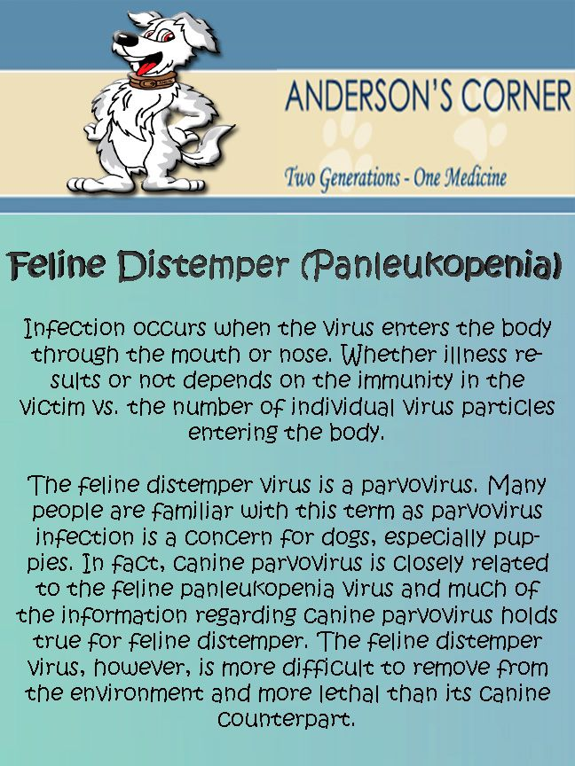 Feline Distemper Feline distemper, Cat body, Cat illnesses