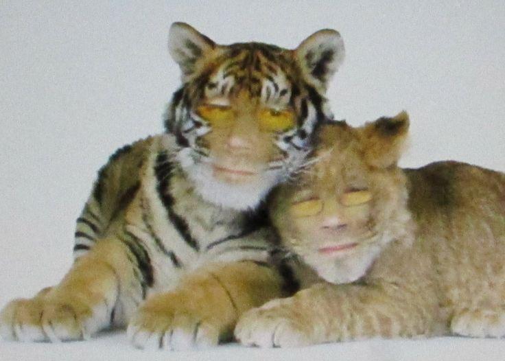 Jokke tiikeri/leijona