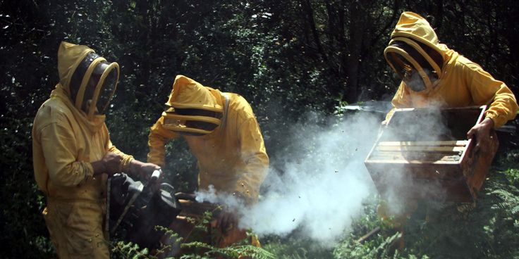 A los mineros ilegales les proponen la apicultura como alternativa.