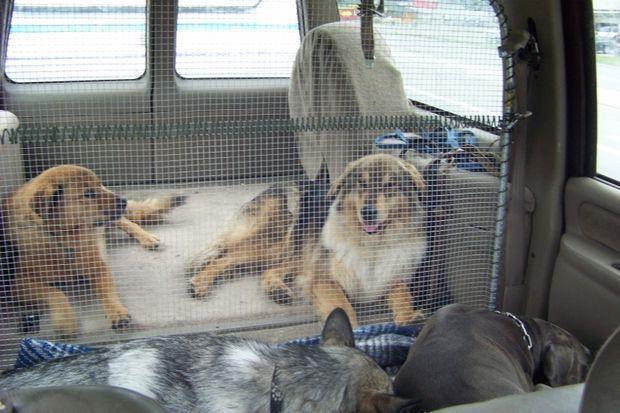 DIY Pet Barrier / Cargo Barrier