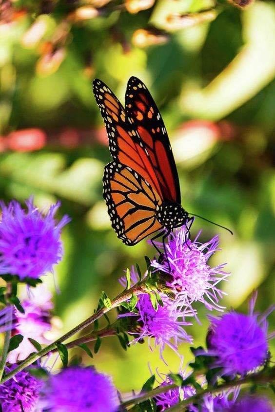 254 best mo native plants images on pinterest