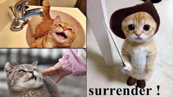 Top 12 funniest cat pictures [GALLERY]