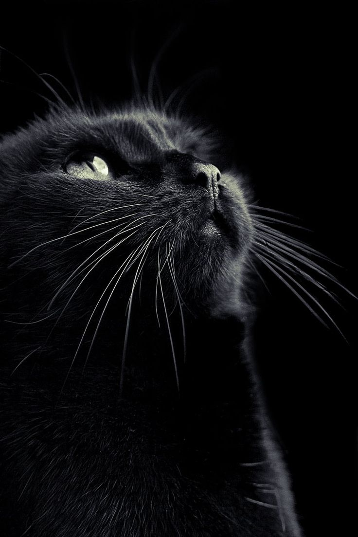 """Sometimes it happens that a black cat lets you pass in front of it..."" #lucky #blackcatsrule"