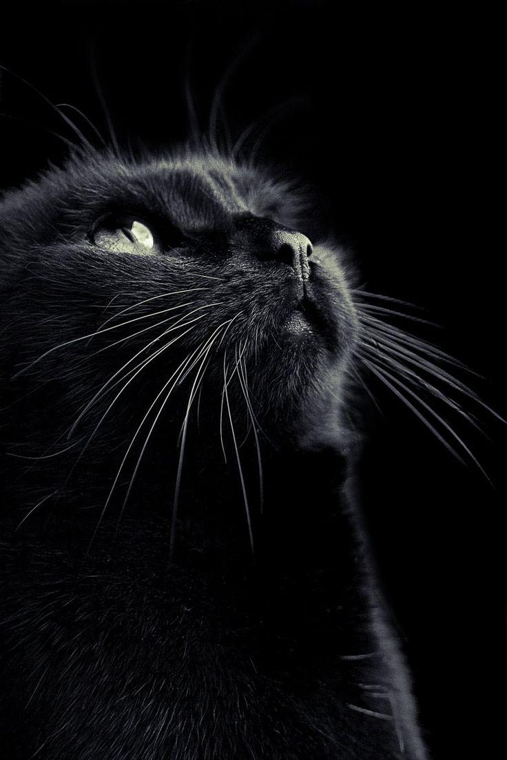 My beautiful black cat.