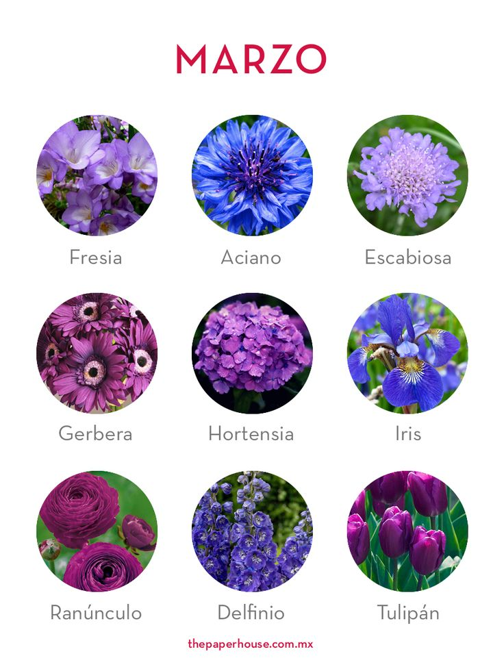 complete guide to purple wedding flowers purple flower - 736×980