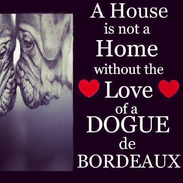 Or the drool of a dogue! <3