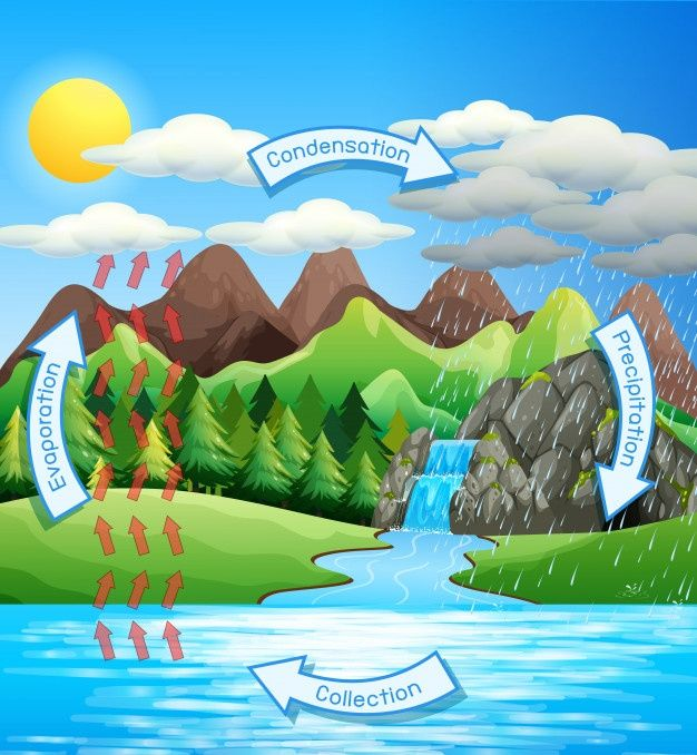 Proceso Del Ciclo Del Agua En La Tierra Free Vector Freepik Freevector Agua Hoja Naturaleza Montana Ciclo Del Agua Tercero De Primaria Agua