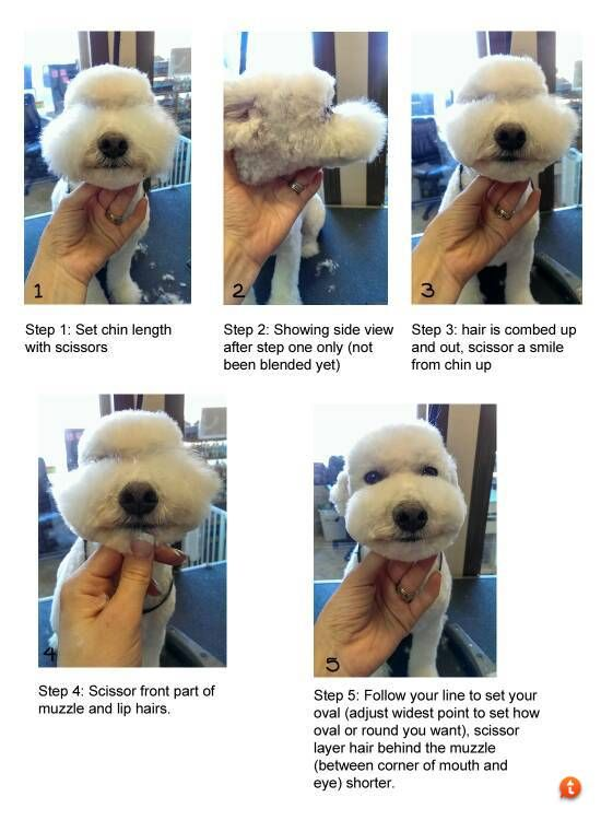 How to create a cute muzzle!