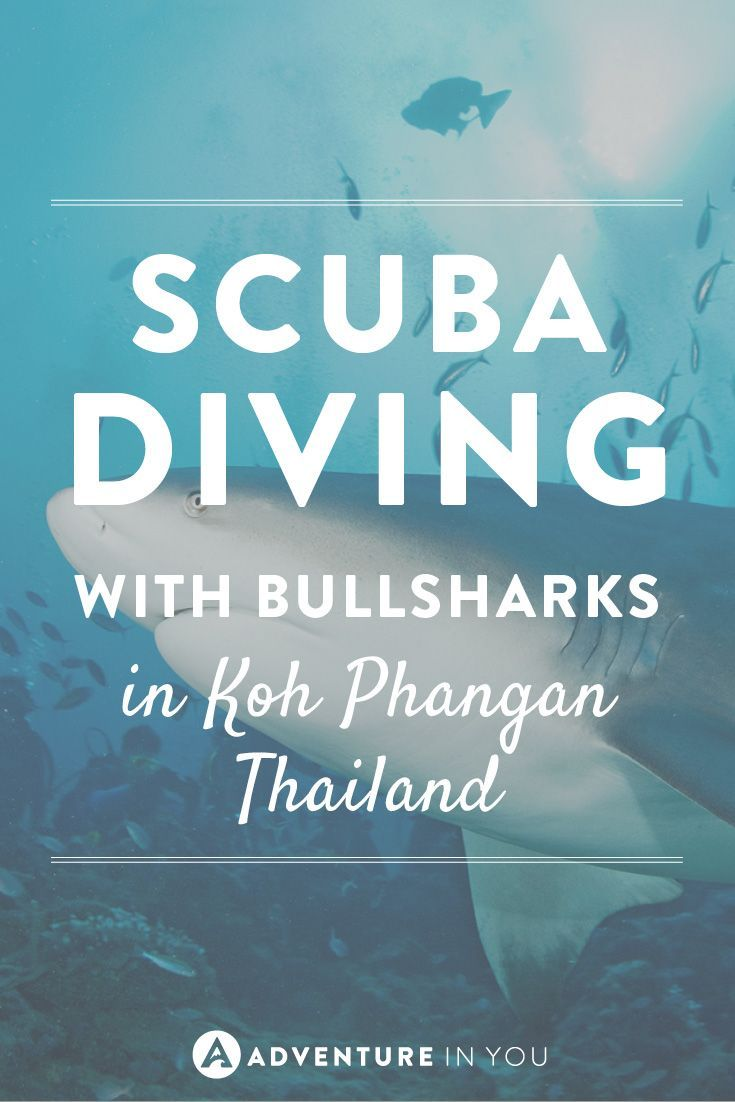 Ever wanted to scuba dive with bullsharks? Don't miss it in Thailand!
