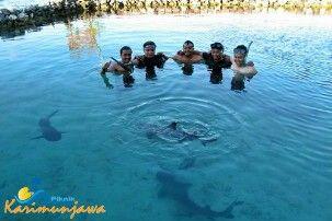 Bridding shark.. Let's join us for you're holidays