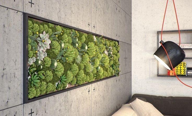 murs en béton avec cadre et plantes succulentes en tant que mur végétal