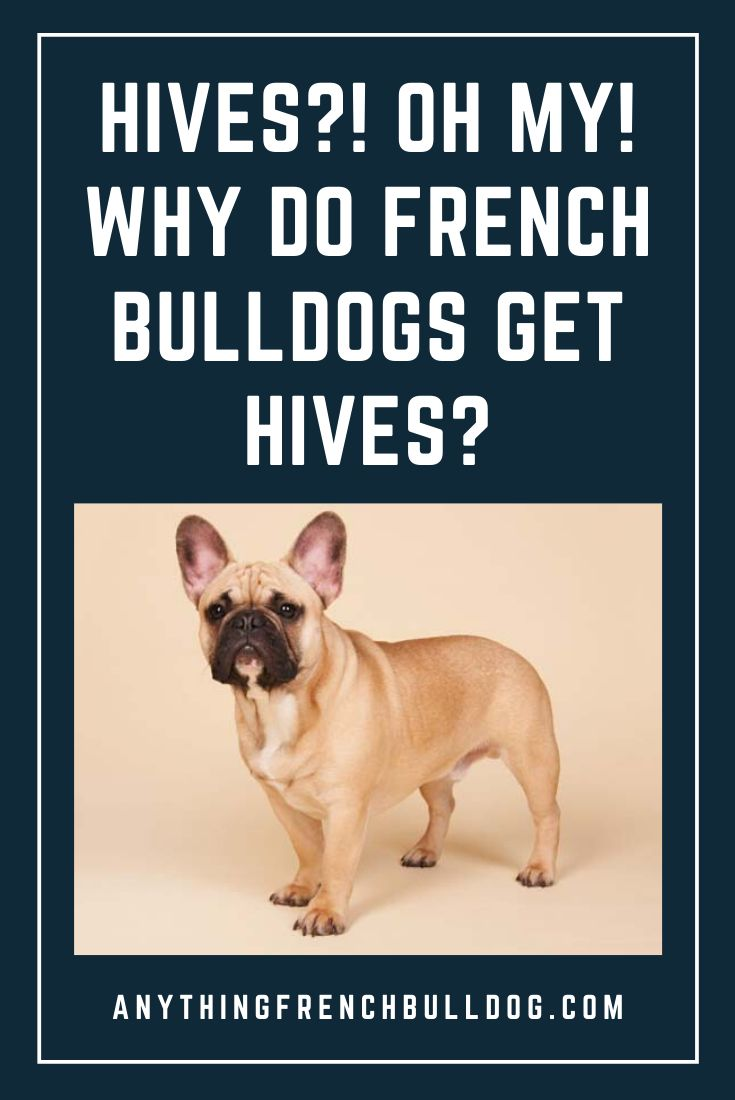 Catch out more at the image link. in 2020 | Dog hives ...