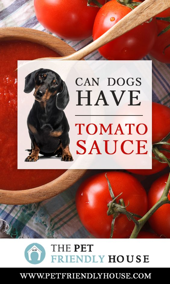 Can Dogs Eat Tomato Sauce, The Answer Is Yes. This Is As