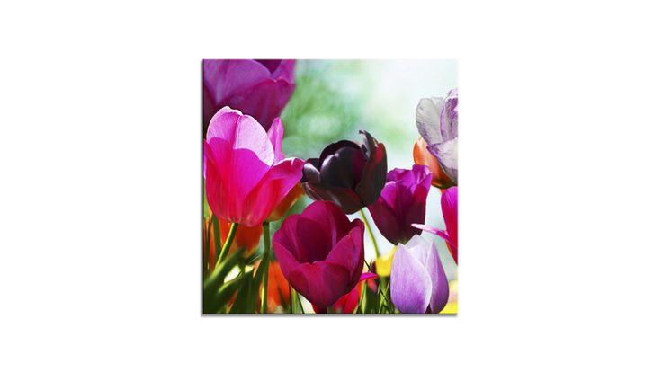 Das Glasbild Tulips I zeigt, dass die Natur die schönsten Bilder malt. Es bringt Ihnen die bunte Farbpalette eines blühenden Tulpenfeldes im Sonnenschein nach Hause. v Bei uns erhältlich:https://shop.webermoebel.de/online-shop/produktdetails-1043-1044-1083-id1040309/kaufen-Moebel-Weber-Herxheim/Moebel-A-Z-Accessoires-Bilder-und-Bilderrahmen/Glasbild-Ars-graphica-aus-Glas-in-Pink-Lila-Gruen-Glasbild-Tulips-I-4-mm-Floatglas-mit-Motiv-ca-30-x-30-cm-guenstiger.html