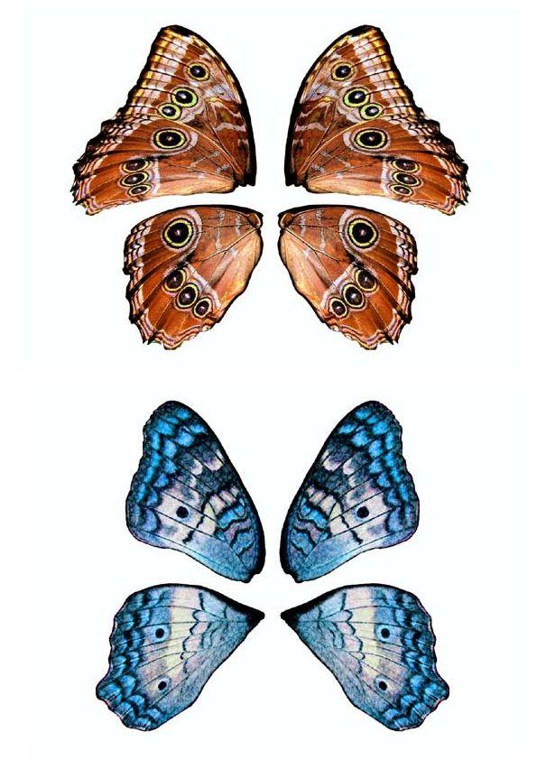 25 best ideas about plantillas para imprimir on pinterest - Plantillas de mariposas ...