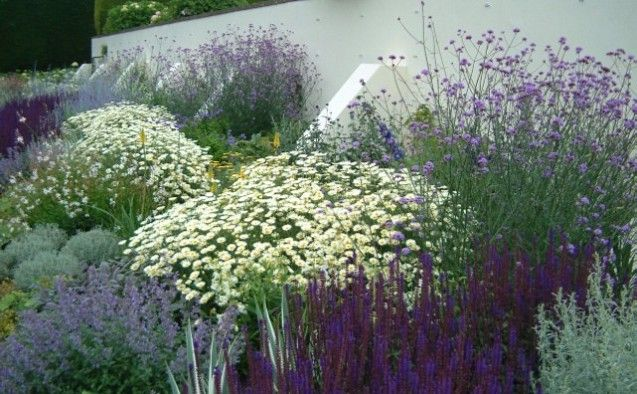 Salvia, chrysanthemum niveum, tall verbena, artemesia, nepeta, a few knifophia in yellow
