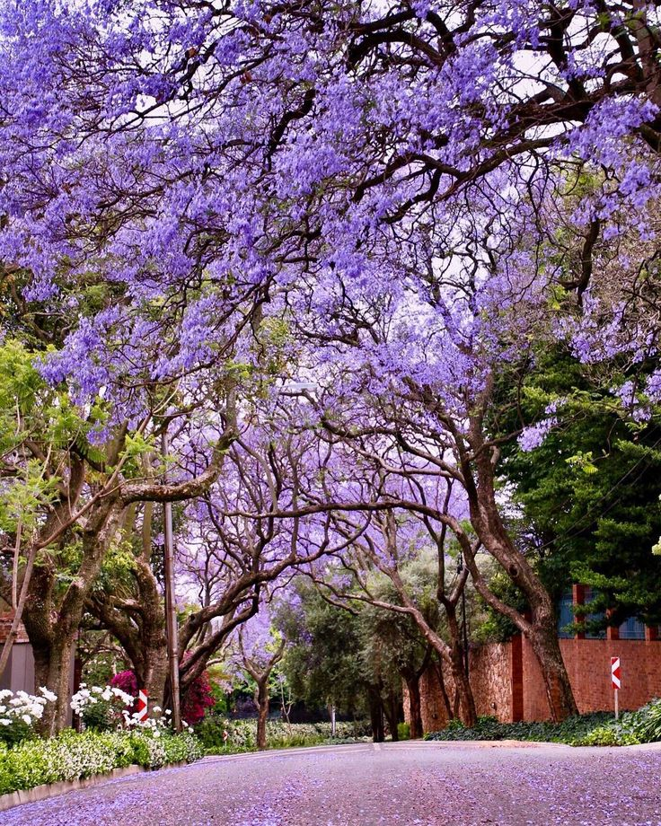 tasneems_photography Wow! So thrilled to take second place in the #jacarandainyourpocket photo competition! 💜 Thanks to all of you lovely people who supported me and voted for my photo. Really appreciate it. 💜💖💜 Well done to @clareappleyard on winning the contest with her beautiful photo 👏🏽👏🏽👏🏽 Enjoy the brunch Clare!! 😋😉💜 Thank you @johannesburginyourpocket and @fsjohannesburg for the prize of breakfast for two! 🍳#jacaranda#jacarandainyourpocket#johannesburg