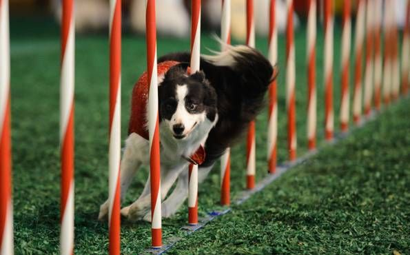 """8) ISLAND OF DOGS & CATS - They had us at """"dogs will dance""""; the clever canines will also do water tricks while cats perform with a little help from master trainer Lou McCammon."""