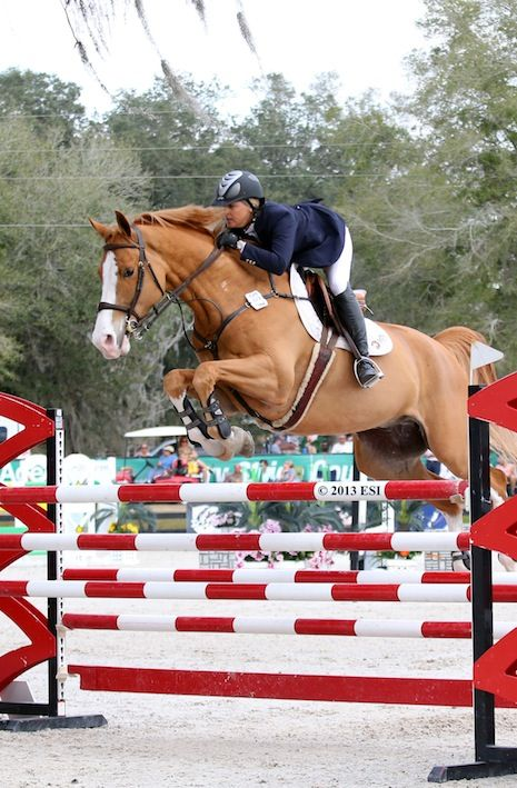 horses jumping at the Grand Prix - Google Search