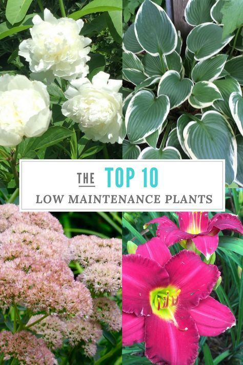 Top 10 Low Maintenance Plants For The Garden Gardening 400 x 300