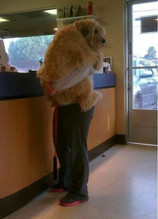 Doggy Does Not Want To See The Vet