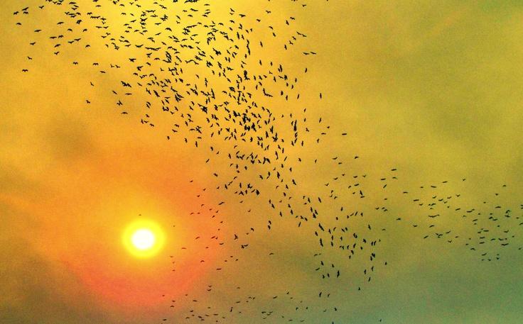 Pájaros en Valpo