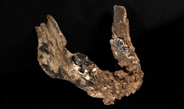 New fossils complicate human family tree  Our own genus may have started off with two species.