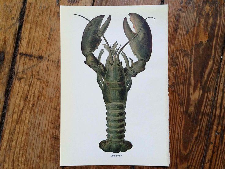 1925 LOBSTER print original vintage marine crustacean engraving - Maine american lobster homarus by antiqueprintstore on Etsy