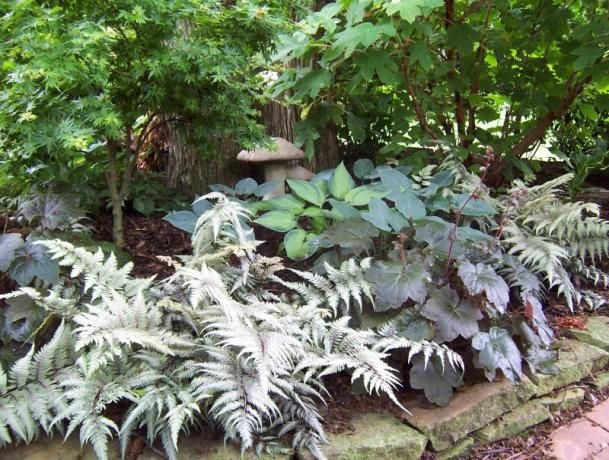 38 Glorious Japanese Garden Ideas: 38 Best Hosta Garden Ideas Images On Pinterest