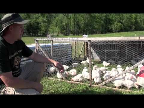 How to raise Meat Chickens - this really makes sense if you have a lot of chickens
