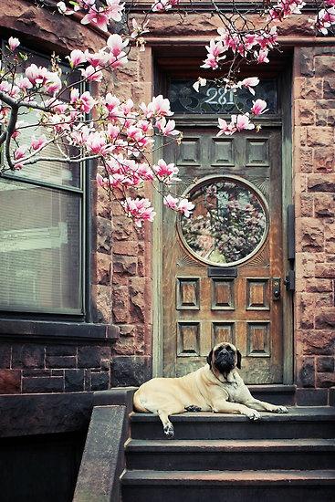 Spring by Lasse Damgaard