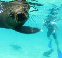 Seal Snorkeling with Swim with Seals in Plettenberg Bay, South Africa