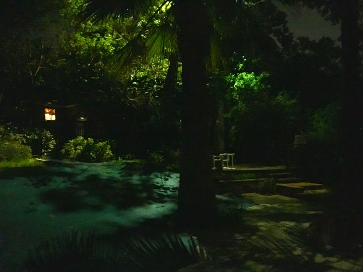 Landscape Lighting Estimates : Images about led lighting installations by dallas landscape on trees