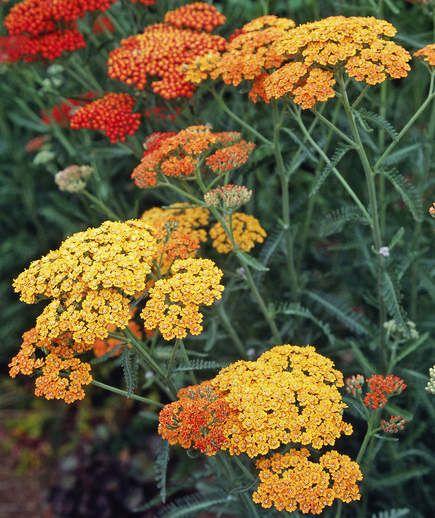 Stock Quote Sun Life Financial: 17 Best Ideas About Drought Tolerant Garden On Pinterest