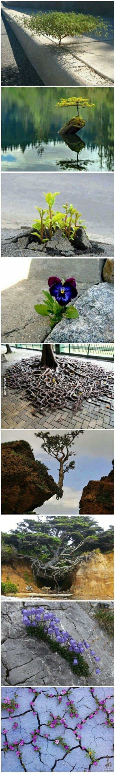 Nature always finds a way.