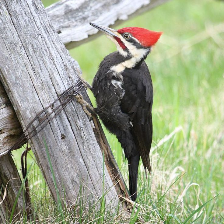 How To Attract 7 Different Types Of Woodpeckers To Your