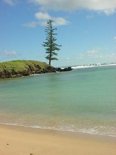 Lone Pine at Emily Bay | Flickr - Photo Sharing!