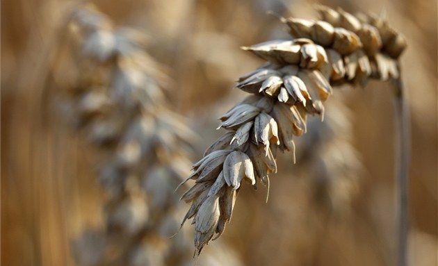 Bezlepkové potraviny mají méně bílkovin a vlákniny, více éček a vyšší cenu.