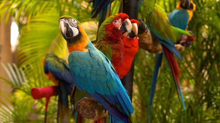 The Magic City: MIAMI!!! | Cut Paste Studio| travel travel destination vacation spot world Jungle Island