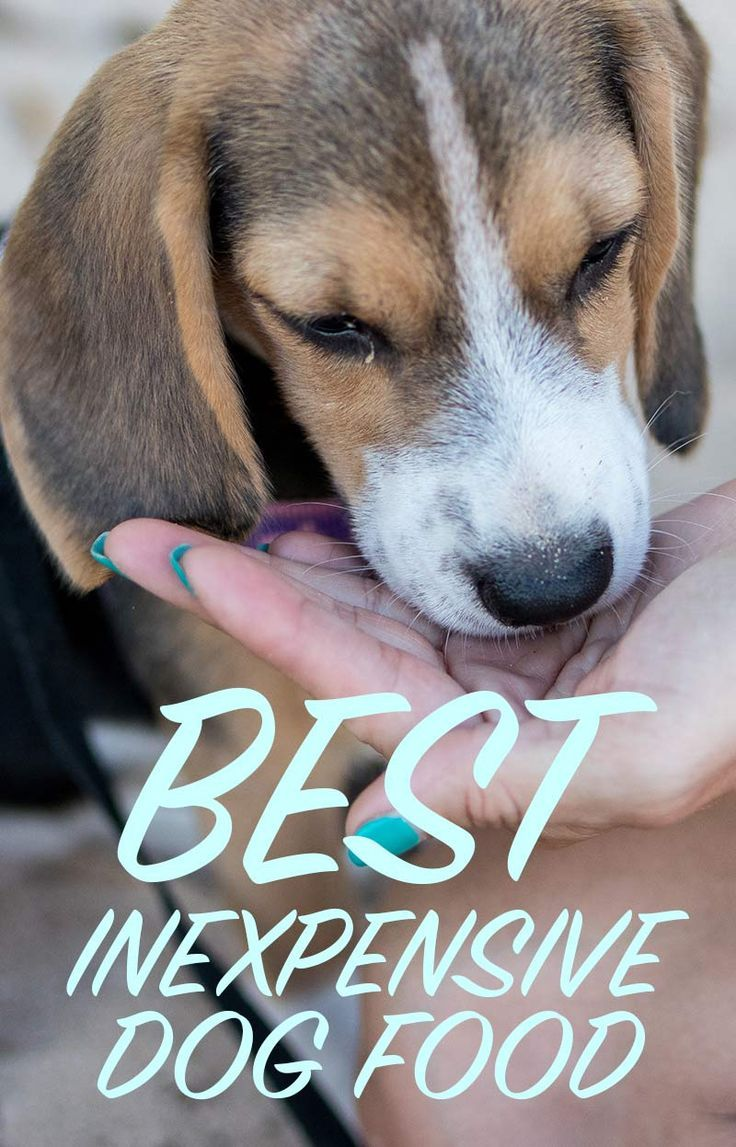 The Best Inexpensive Dog Food Great Nutrition Low Prices Dog