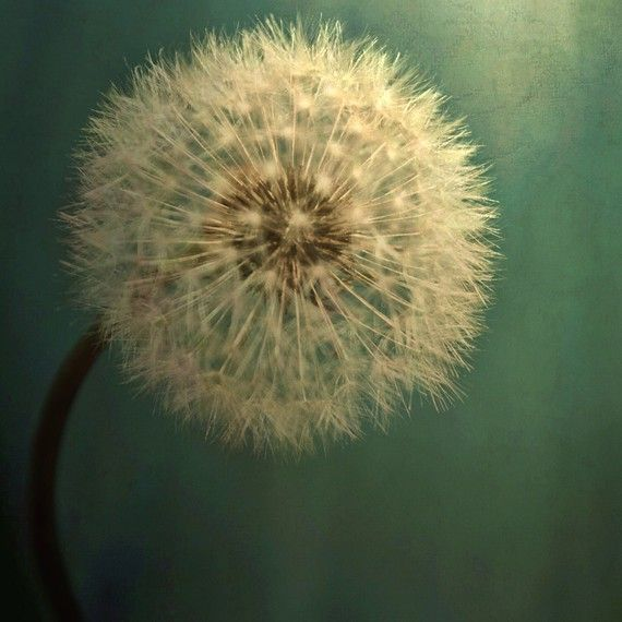 20x20 Fine Art Photo You Choose by SylviaCPhotography on Etsy, $65.00